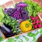 Greens/Veggies/Salads